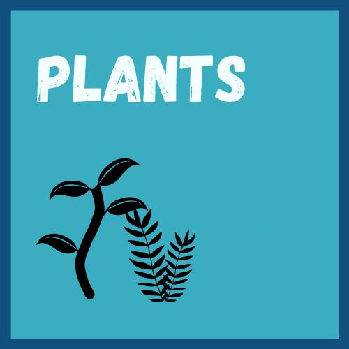 Saltwater Plants